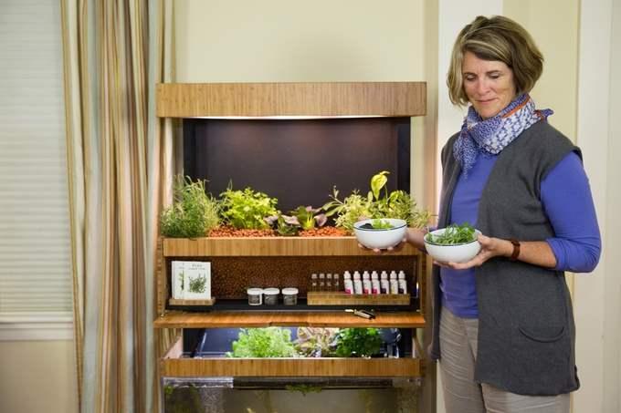 Grove Ecosystem - Menanam Sayuran Dalam Ruangan 1