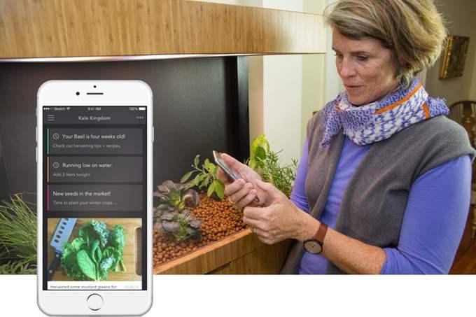 Grove Ecosystem - Menanam Sayuran Dalam Ruangan 2