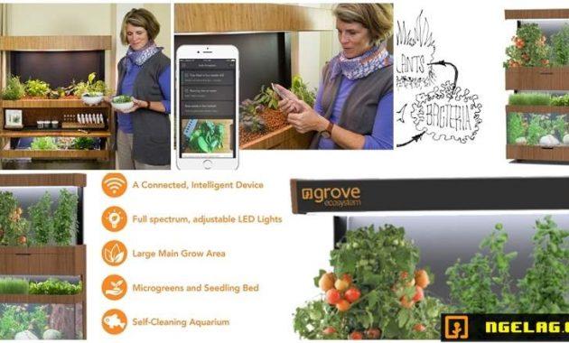 Grove Ecosystem - Menanam Sayuran Dalam Ruangan Featured