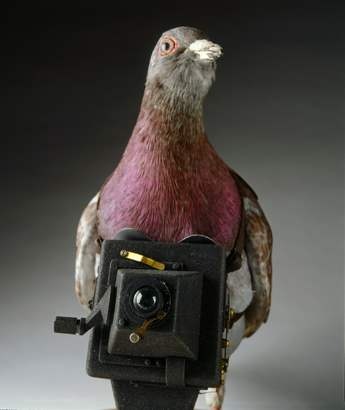 Spy Gadget Ala James Bond_PIGEON CAMERA_Ngelag.com