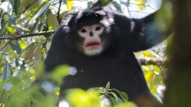 10 Spesies Baru Yang Ditemukan Di Tahun 2015 5