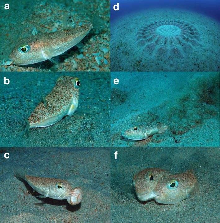 10 Spesies Baru Yang Ditemukan Di Tahun 2015 7