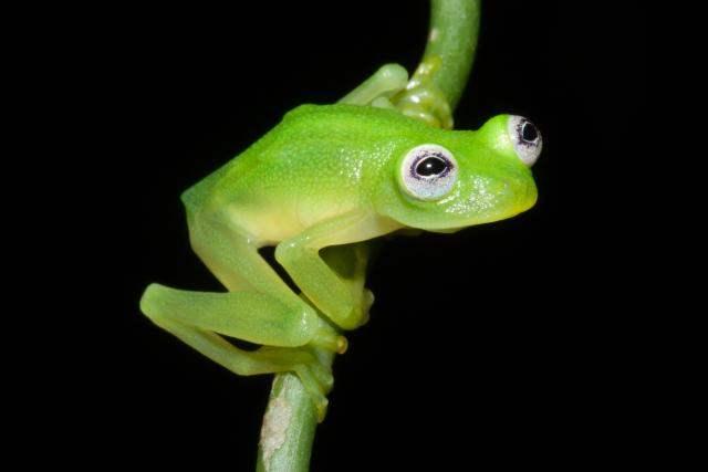 Brian Kubicki, Costa Rican Amphibian ResearchCenter