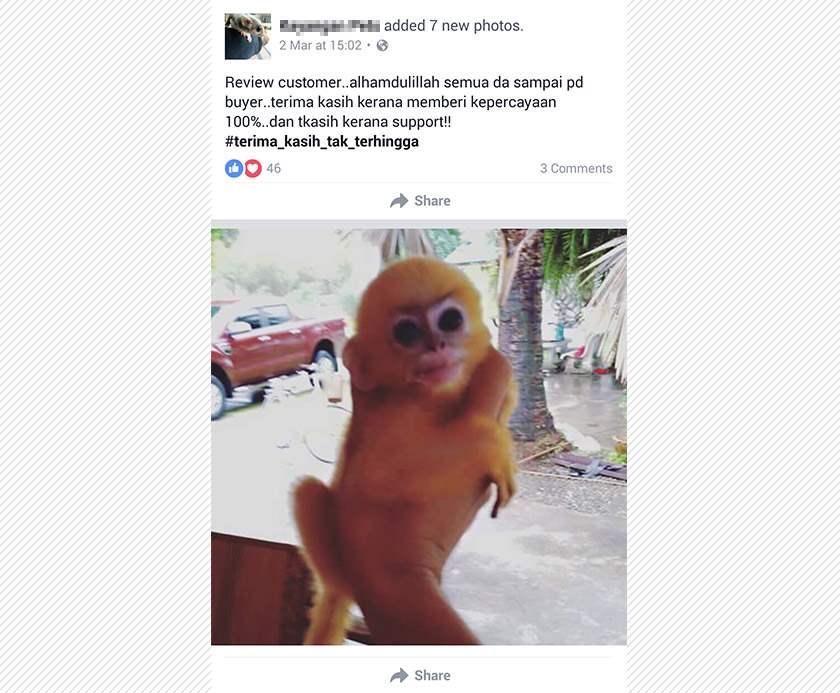 Di Malaysia Jual Beli Satwa Langka Lewat Facebook Owa